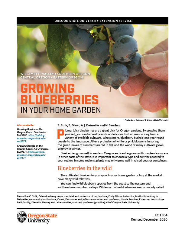Growing Blueberries In Your Home Garden Osu Extension