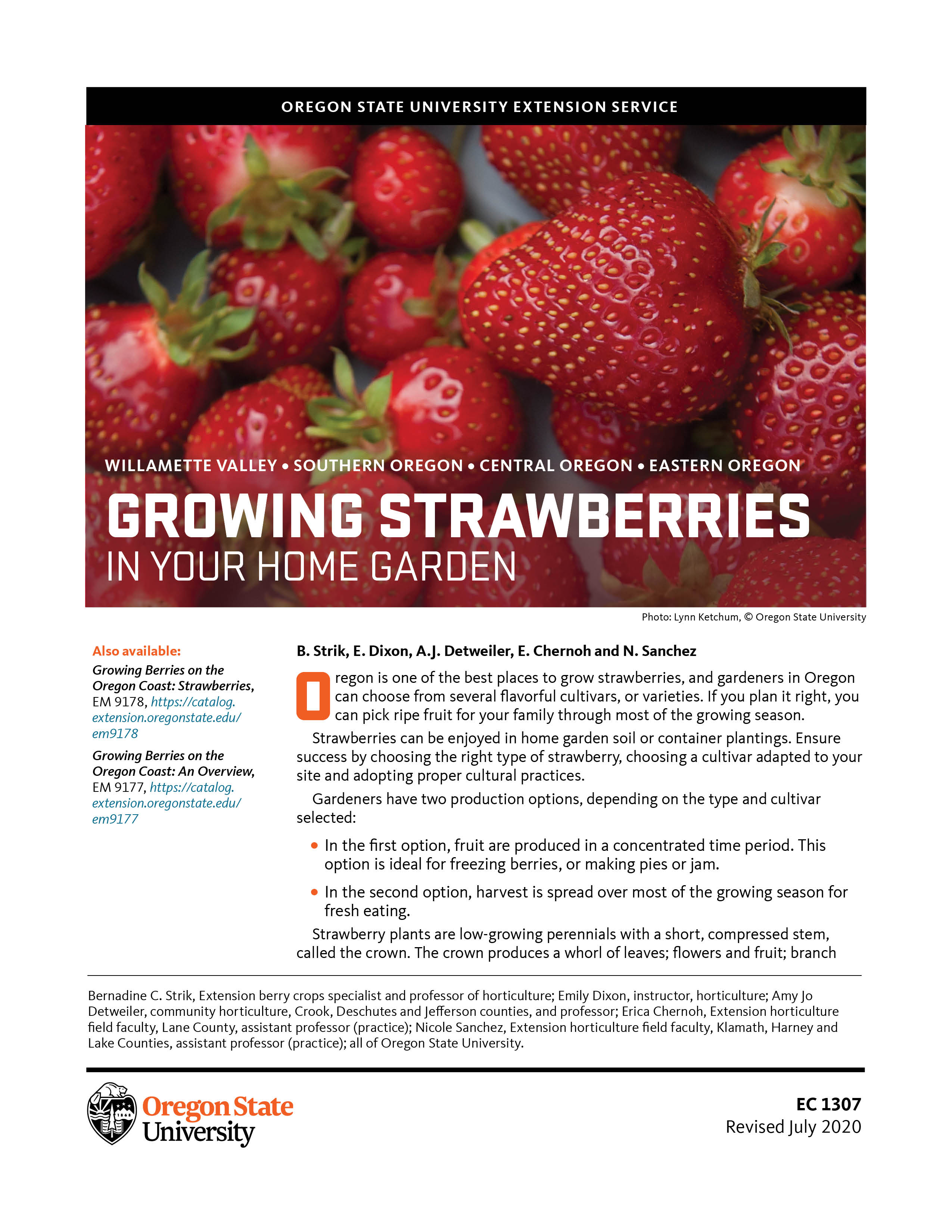 Growing Strawberries In Your Home Garden Osu Extension
