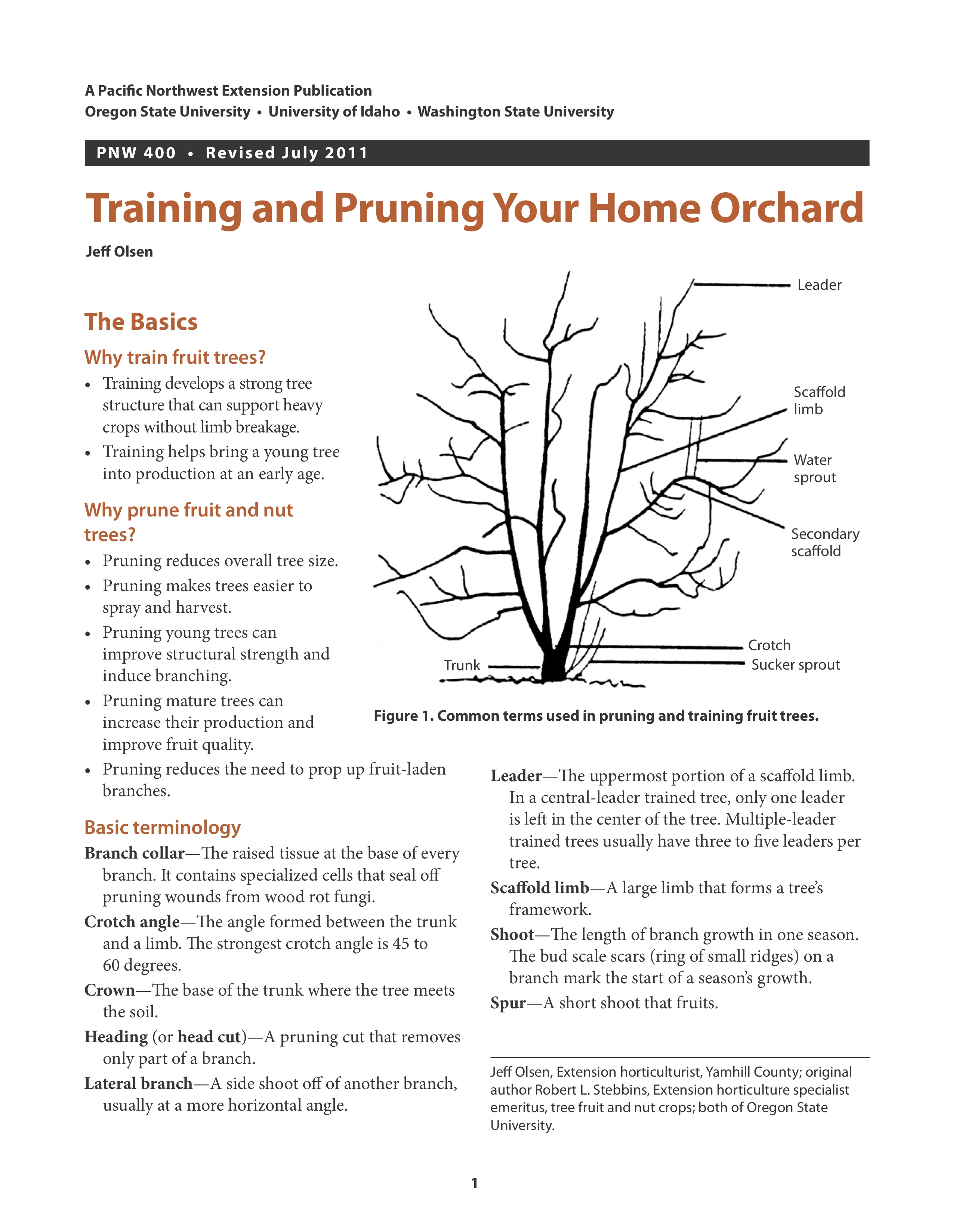 Training And Pruning Your Home Orchard Osu Extension Catalog