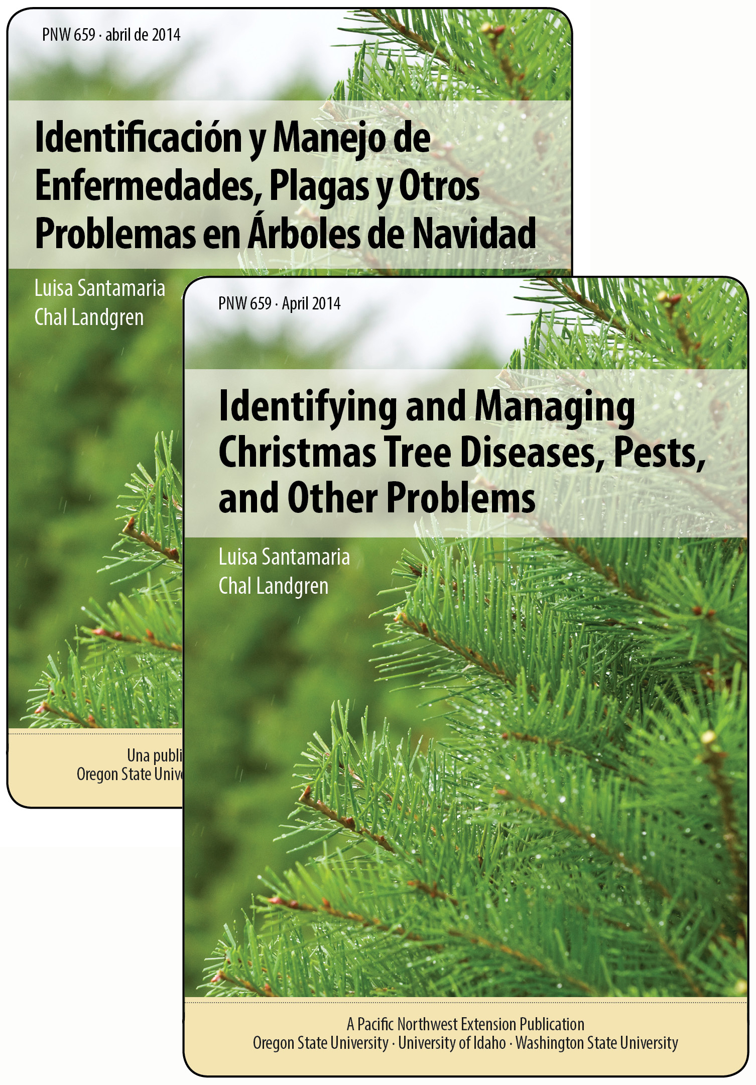 Identifying And Managing Christmas Tree Diseases Pests And Other