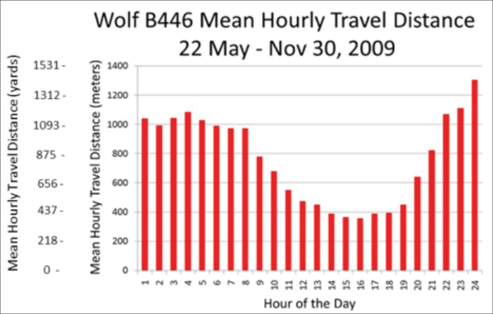 Figure 7. Hourly travel of wolf B446 averaged over the period between May 22, 2009 and November 30, 2009. Most of the travel occurred at night.
