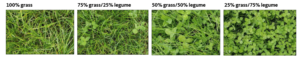 Visual guide for grass: legume ratio in pasture. Legumes contribute plant-available N, so N fertilizer applications can be reduced as the percentage of legume increases. Photos: Amber Moore, © Oregon State University.