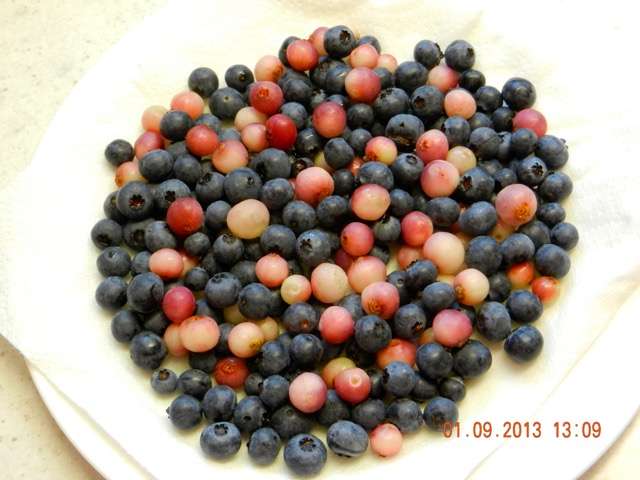Photo of 'Pink Lemonade' mixed with other blueberries