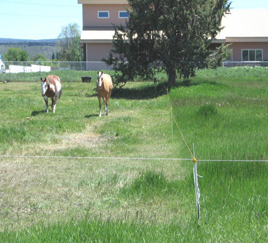 Figure 11. Divide pastures into paddocks with fencing. Rotate horses among the paddocks to give pasture plants time to regrow before re-grazing. Photo: Garry Stephenson, © Oregon State University