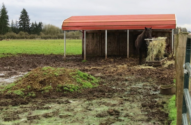 Figure 2. Standing in mud and manure can cause health problems for horses. Manage grazing, manure and the flow of water across your property to prevent mud. Photo: Melissa Fery, © Oregon State University