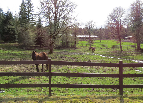 Figure 4. Keep horses off pastures during the rainy season. Because wet soil compacts under pressure from horse hooves, keep horses in a sacrifice area during wet months. A sacrifice area is an area of pasture that you use to hold horses while allowing other parts of the pasture to rest. Photo: Melissa Fery, © Oregon State University