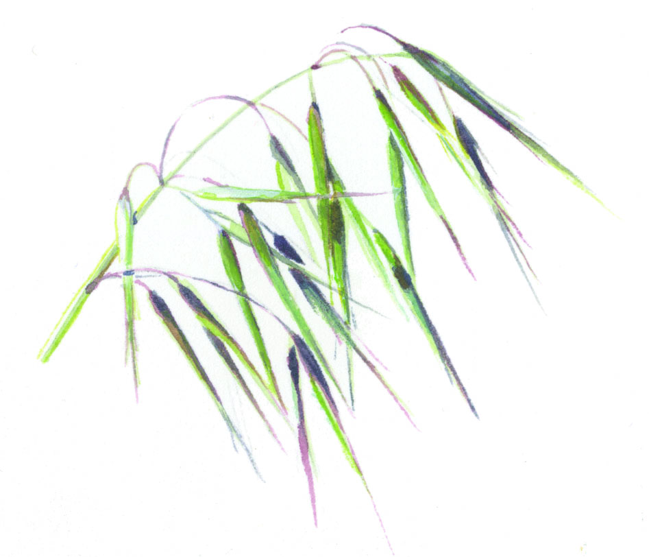 Invasive annual grasses