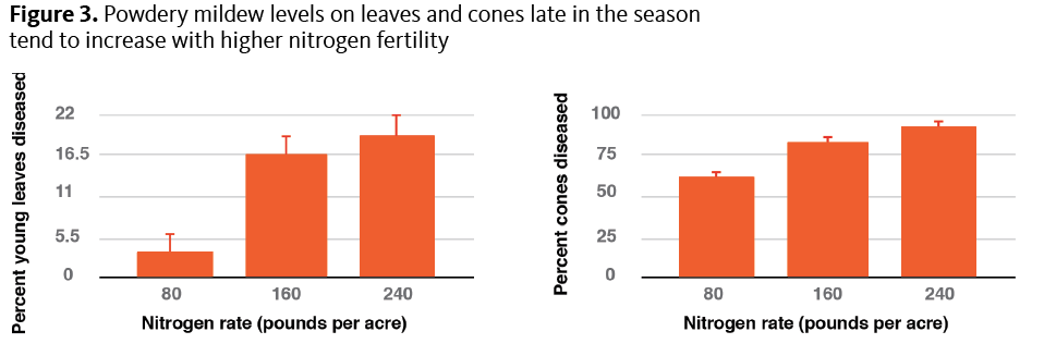 Figure 3. Powdery mildew levels on leaves and cones late in the season tend to increase with higher nitrogen fertility