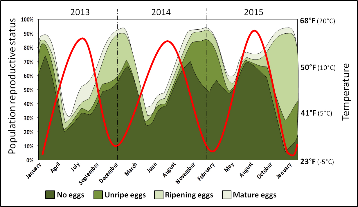 Figure 1. SWD reproductive biology during three consecutive years (2013–15). Different green shades represent the proportion of the different reproductive stages of SWD females at any time; specifics could vary in another region or growing season. The red line represents temperature. The population distribution illustrates a general trend; specifics could vary in another region. (Adapted from Grassi et al. 2018).