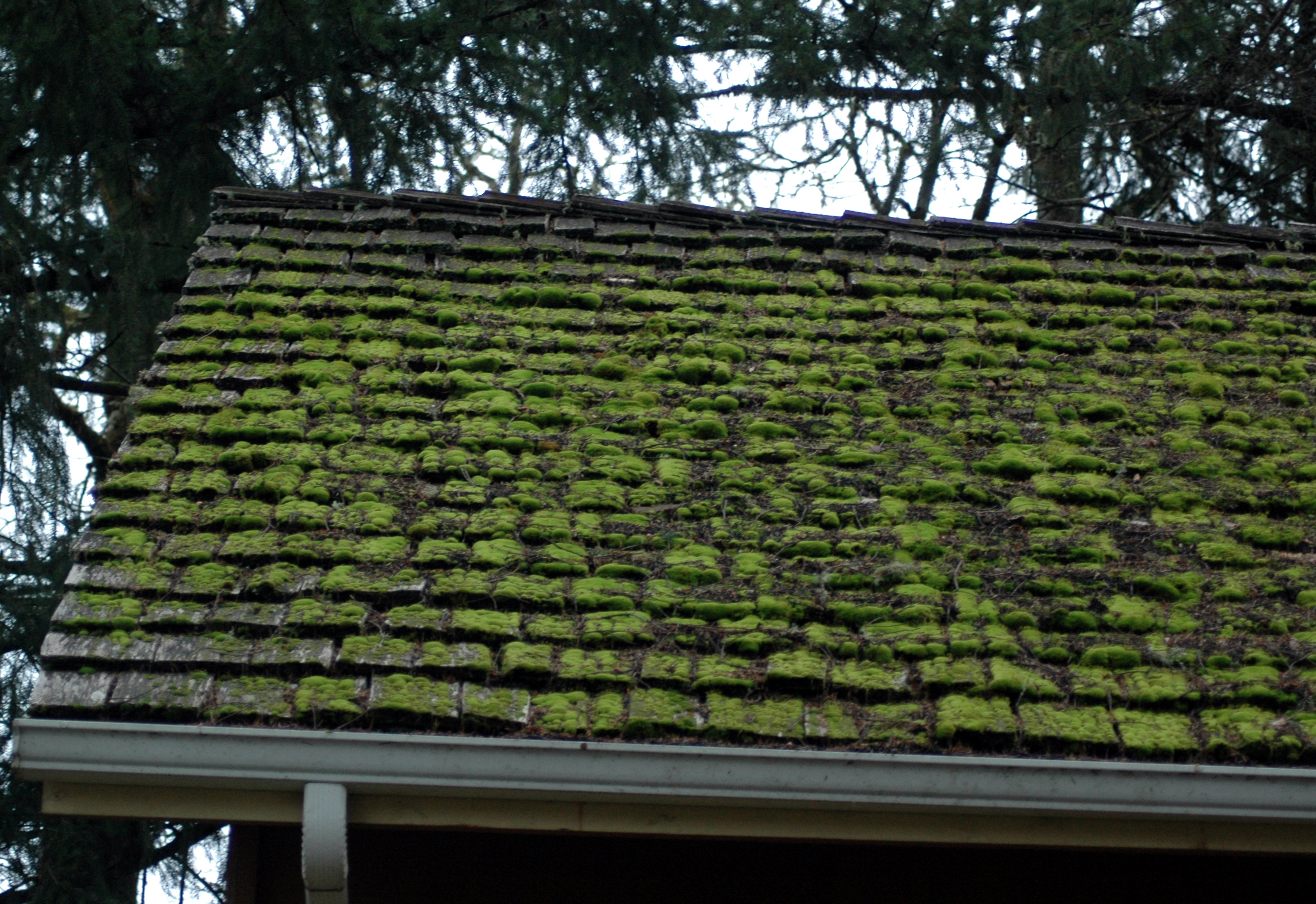 Trees shade mossy roof