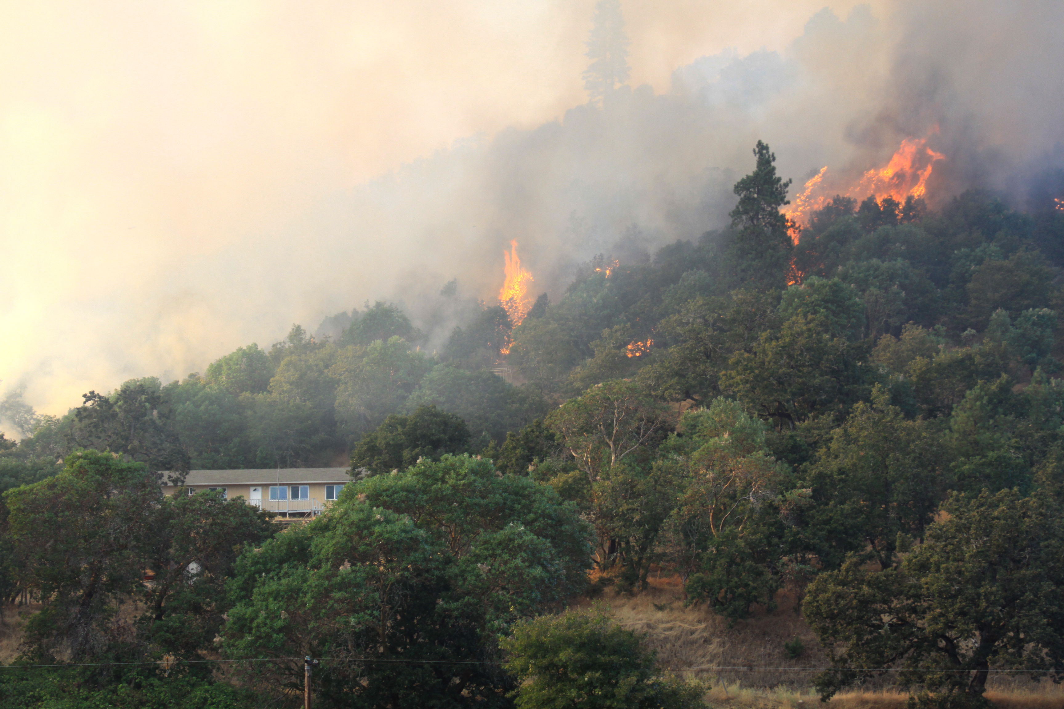 Smoke and fire on forested hillside