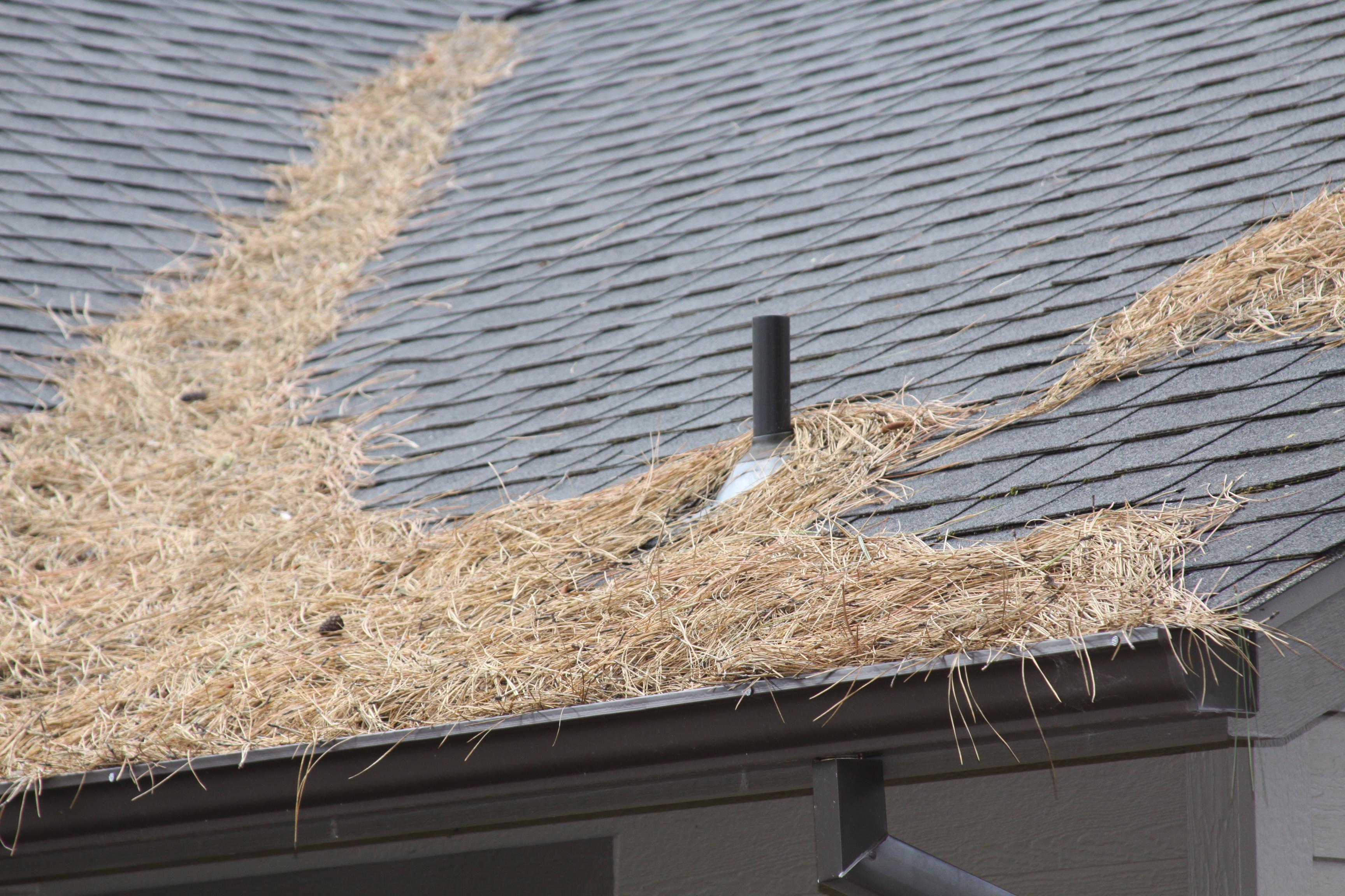 tree litter on roof