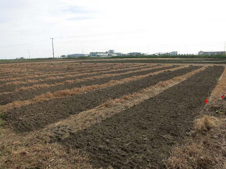 Field cultivated for bed production.