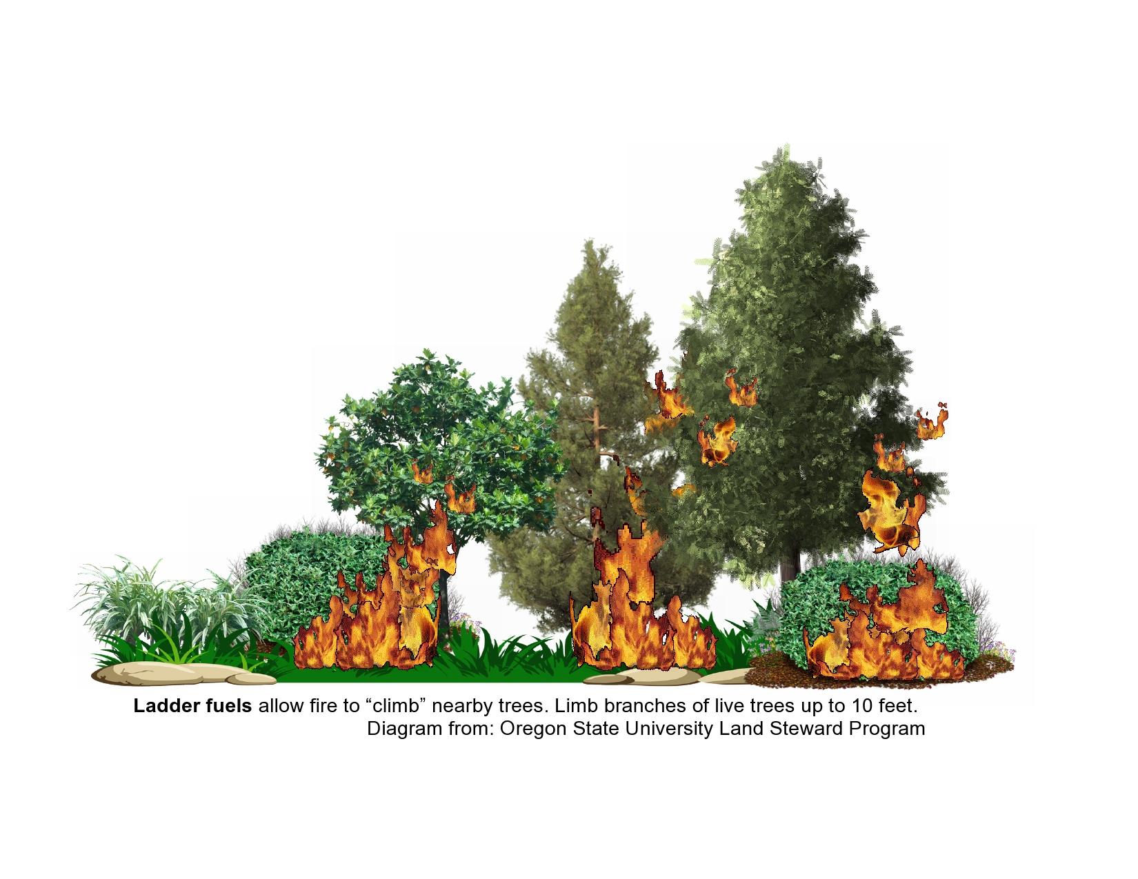 fires climbing canopy