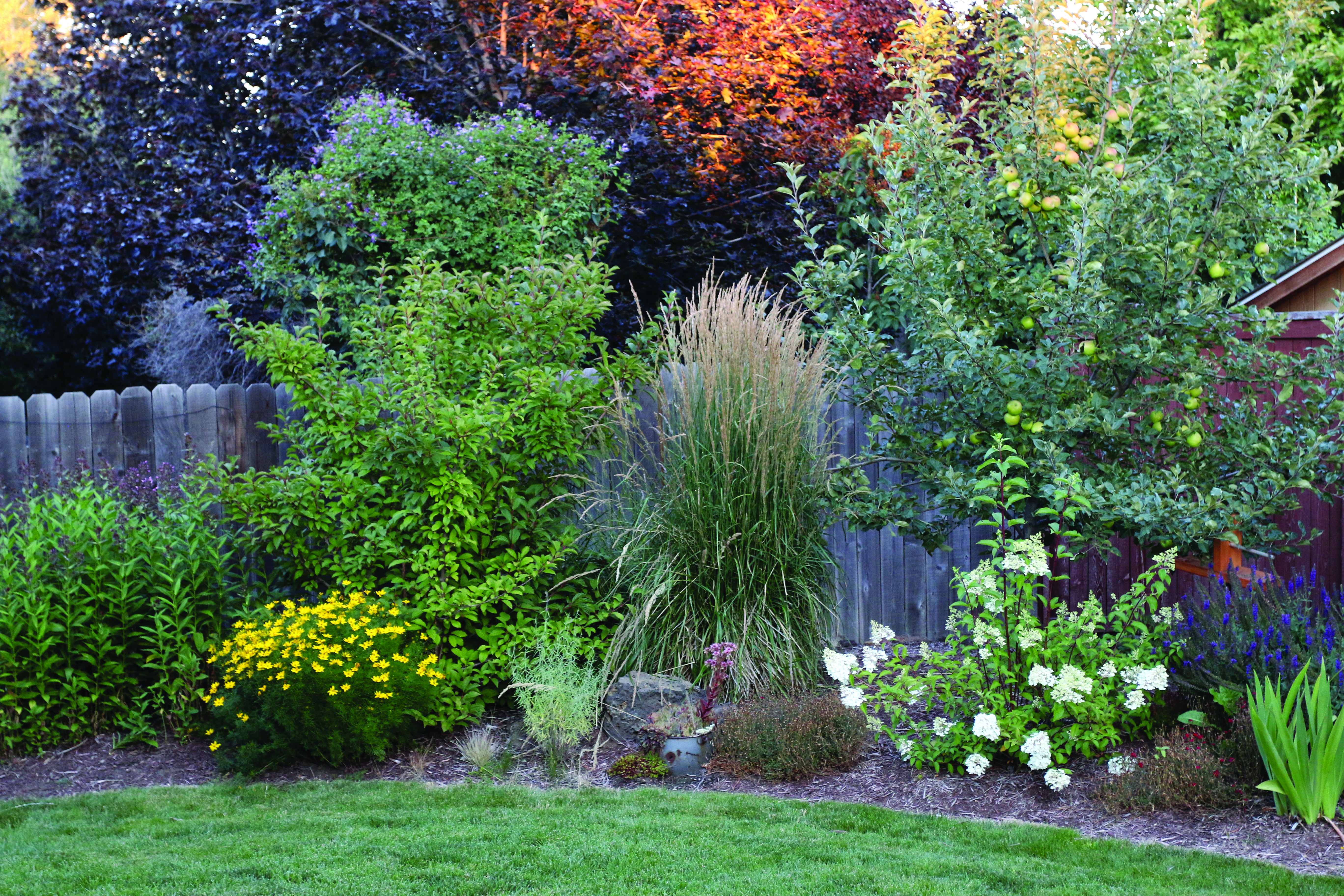Garden scene with grasses, flowers, shrubs