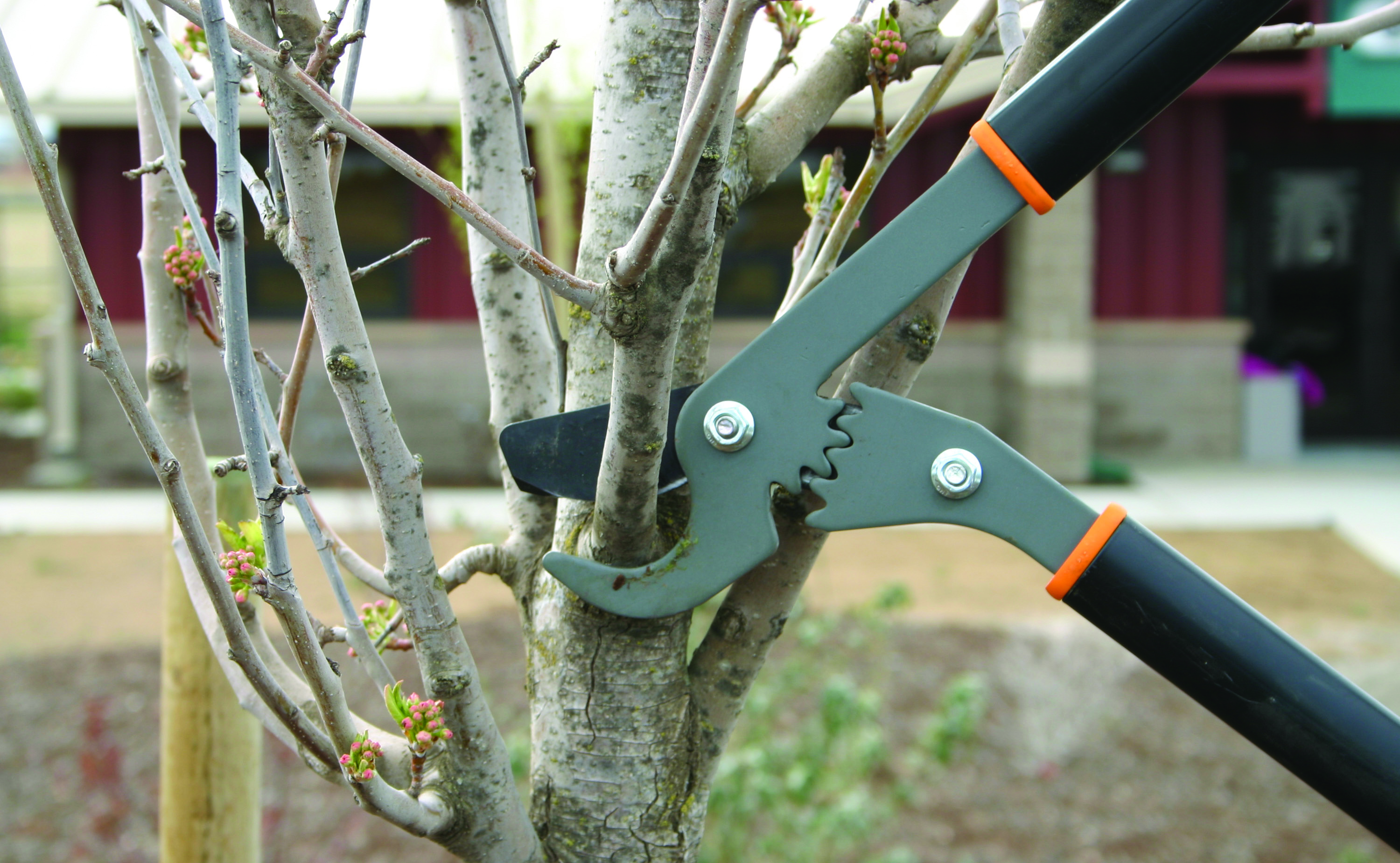 Figure 10. Pruning lopers