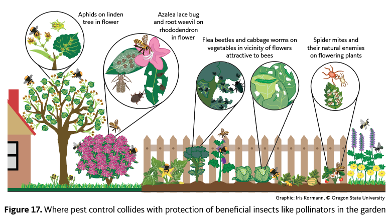 Pollinators visit many of the same plants that attract insect pests. Avoid applying pesticides to plants whose flowers attract bees.