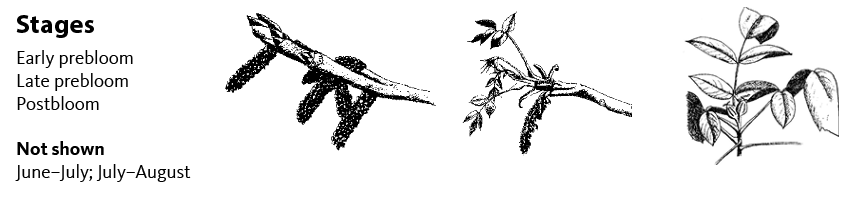 Early prebloom (left), late prebloom, post bloom