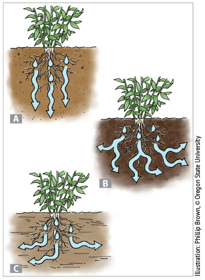 Sandy (A), loamy (B), and clay (C) soil types store and disperse water in different ways.