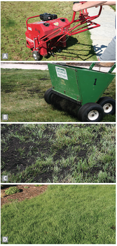 Aeration, spreading compost, healthy grass