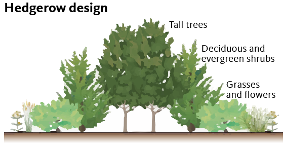 Tall trees, shrubs, perennial plants and grasses