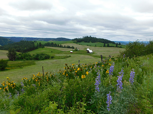 Long view of farm, fields and flowers