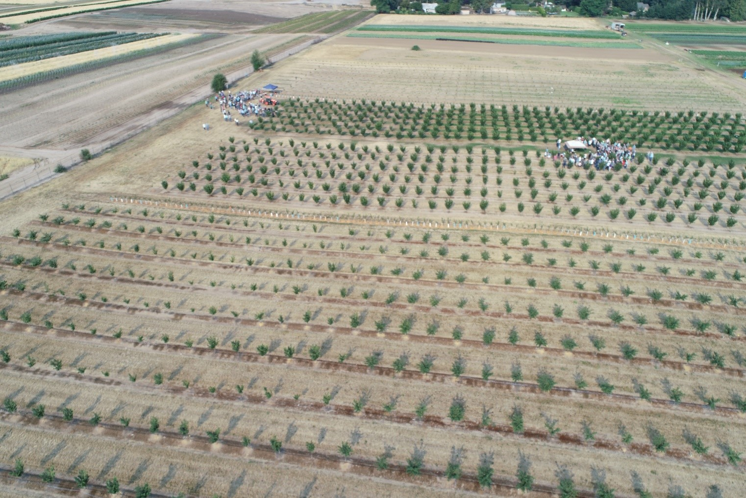 Figure 1. An aerial view of your farm operation can be an attractive addition to advertisements.