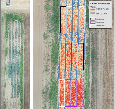 Figure 2. Unmanned aerial systems image samples from a trial of fungicides in RGB (left) and using multispectral image analysis with the OSAVI index (right). Both visual rating by an expert pathologist and independently analyzed imagery revealed higher plant growth in Treatment 2.