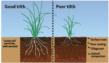 Good tilth, left, shows loose soil and a healthy plant. Poor tilth, right, shows compacted soil and a shorter plant.