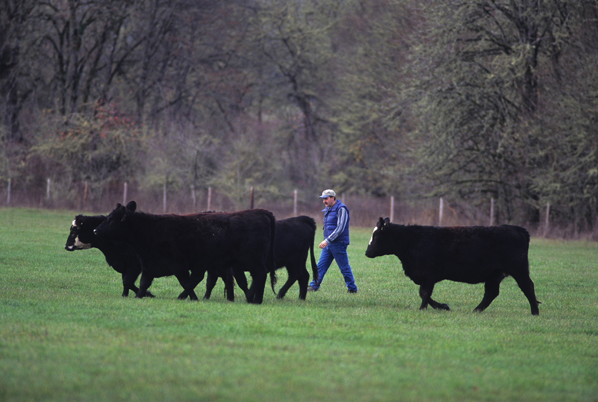 Beef Production for Small Farms: An Overview | OSU Extension Catalog