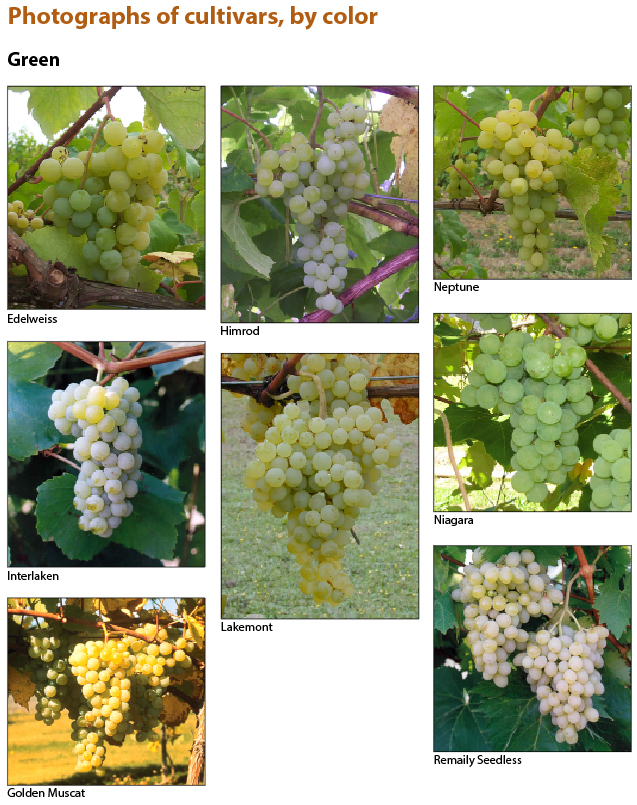 Photographs of cultivars, by color, page 1.