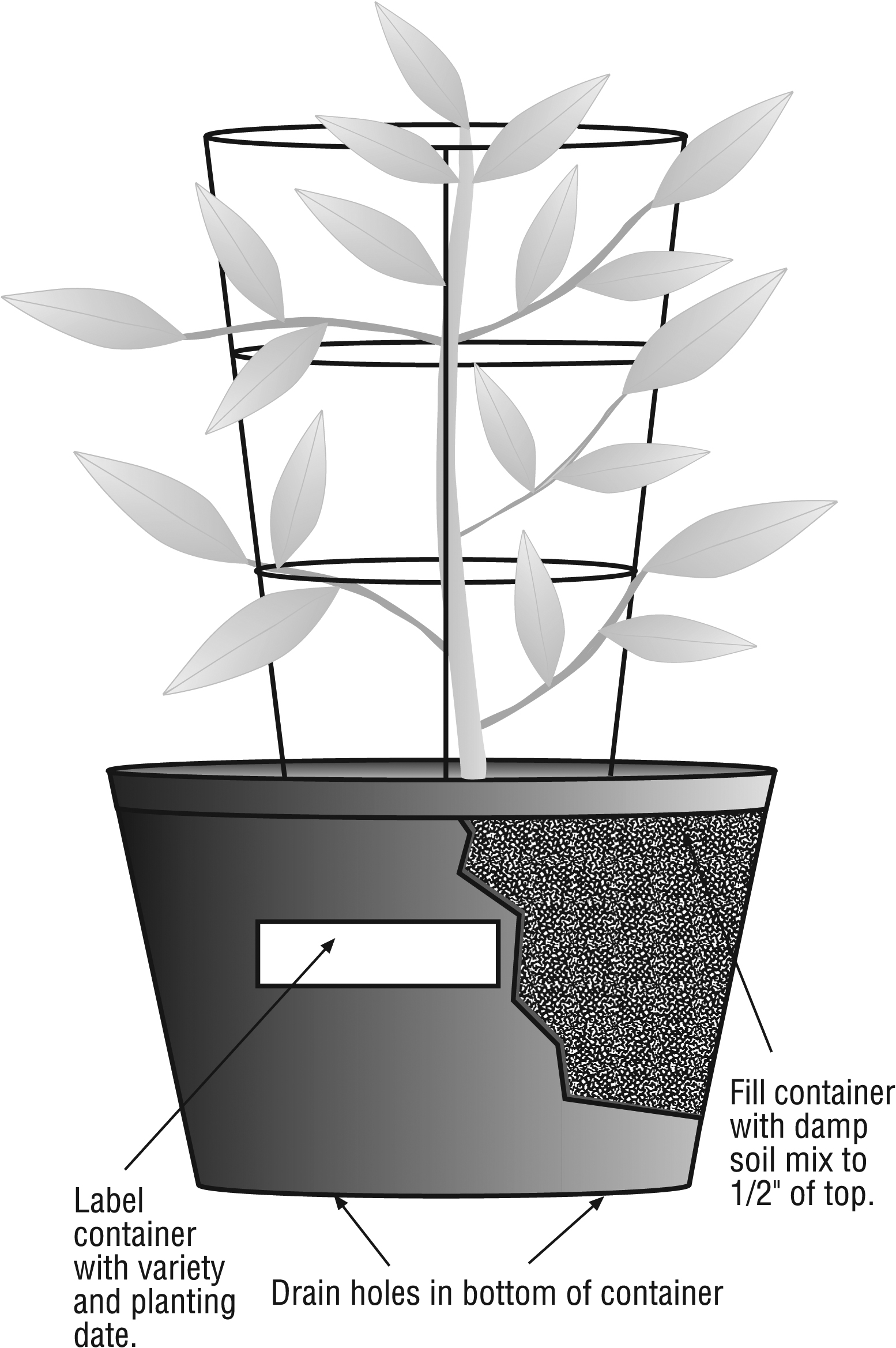 "drawing of container with plant: label container with variety and planting date; drain holes in bottom of container; fill container with damp soil mix to 1/2"" of top."