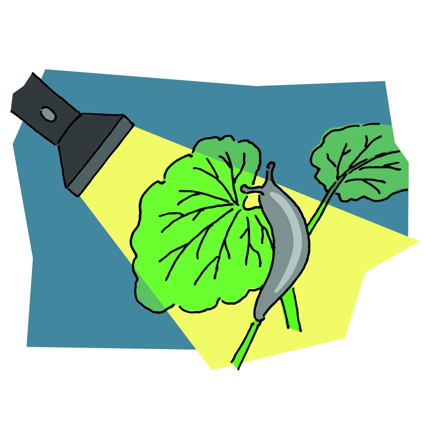 Flashlight showing slug on plant