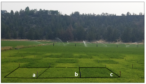 Photo showing experimental plots to compare N and S treatments