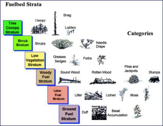 Figure 3. Fuelbed strata and categories