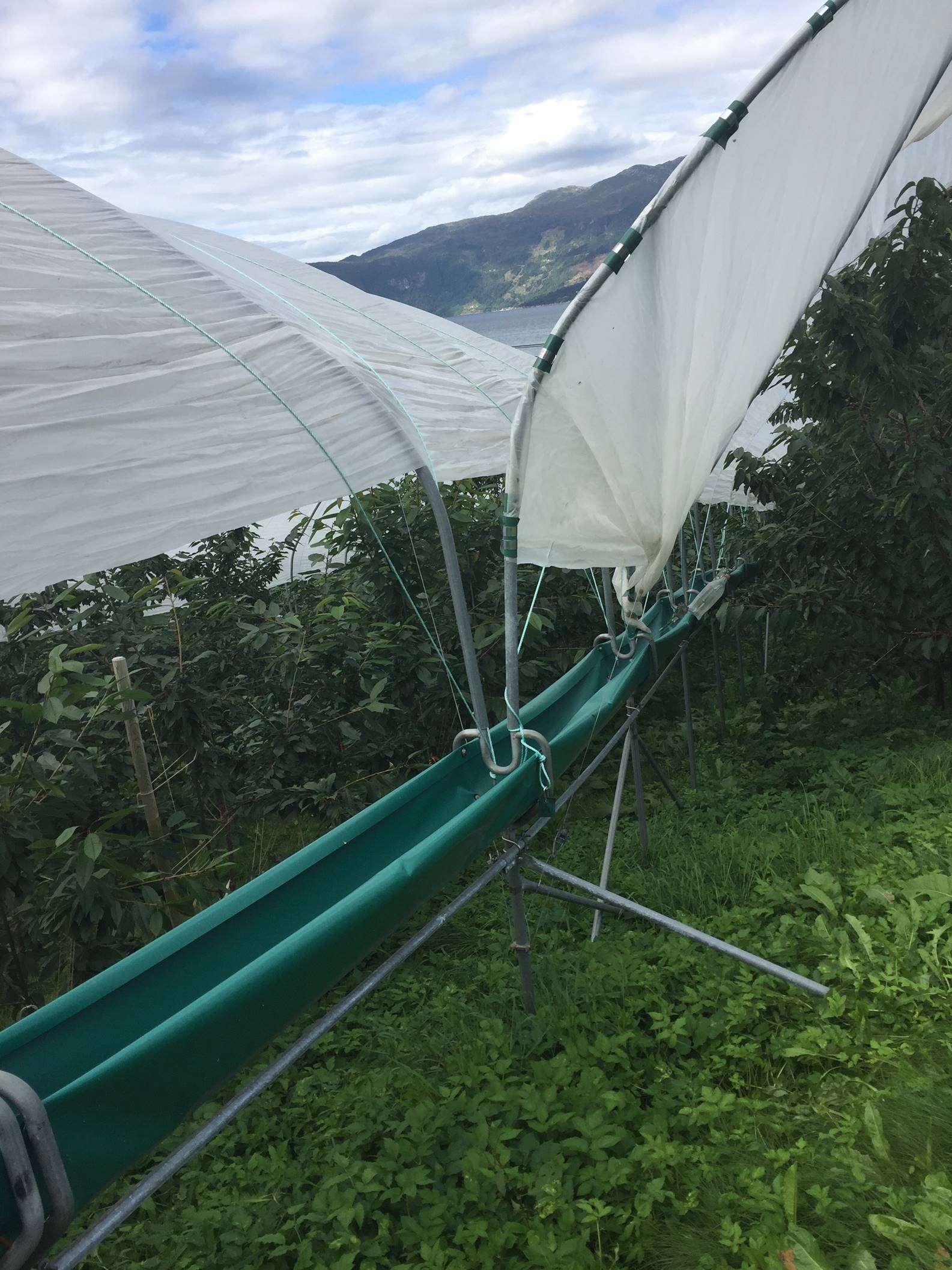 Gutters added to high tunnels remove rainwater from the orchard and prevent water from soaking into the ground beneath.