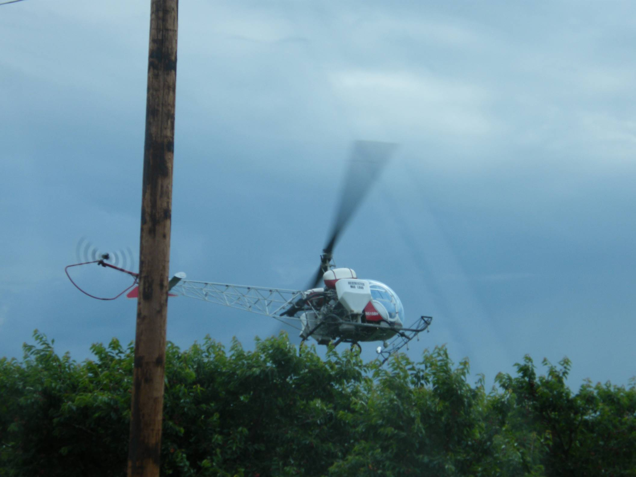 A helicopter is used to dry fruit after a rainfall in Milton Freewater, Oregon.
