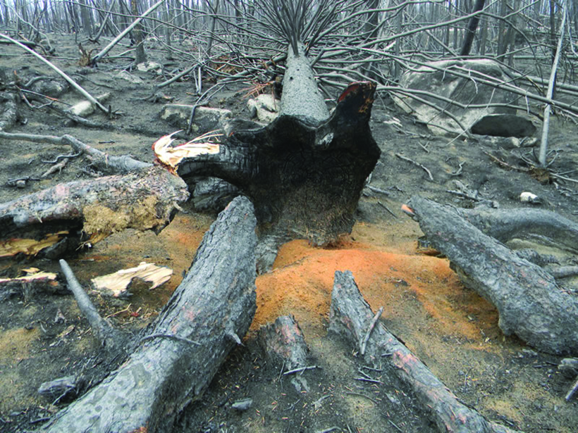 Figure 10. High-severity fires can cause intense damage to both the overstory and understory.