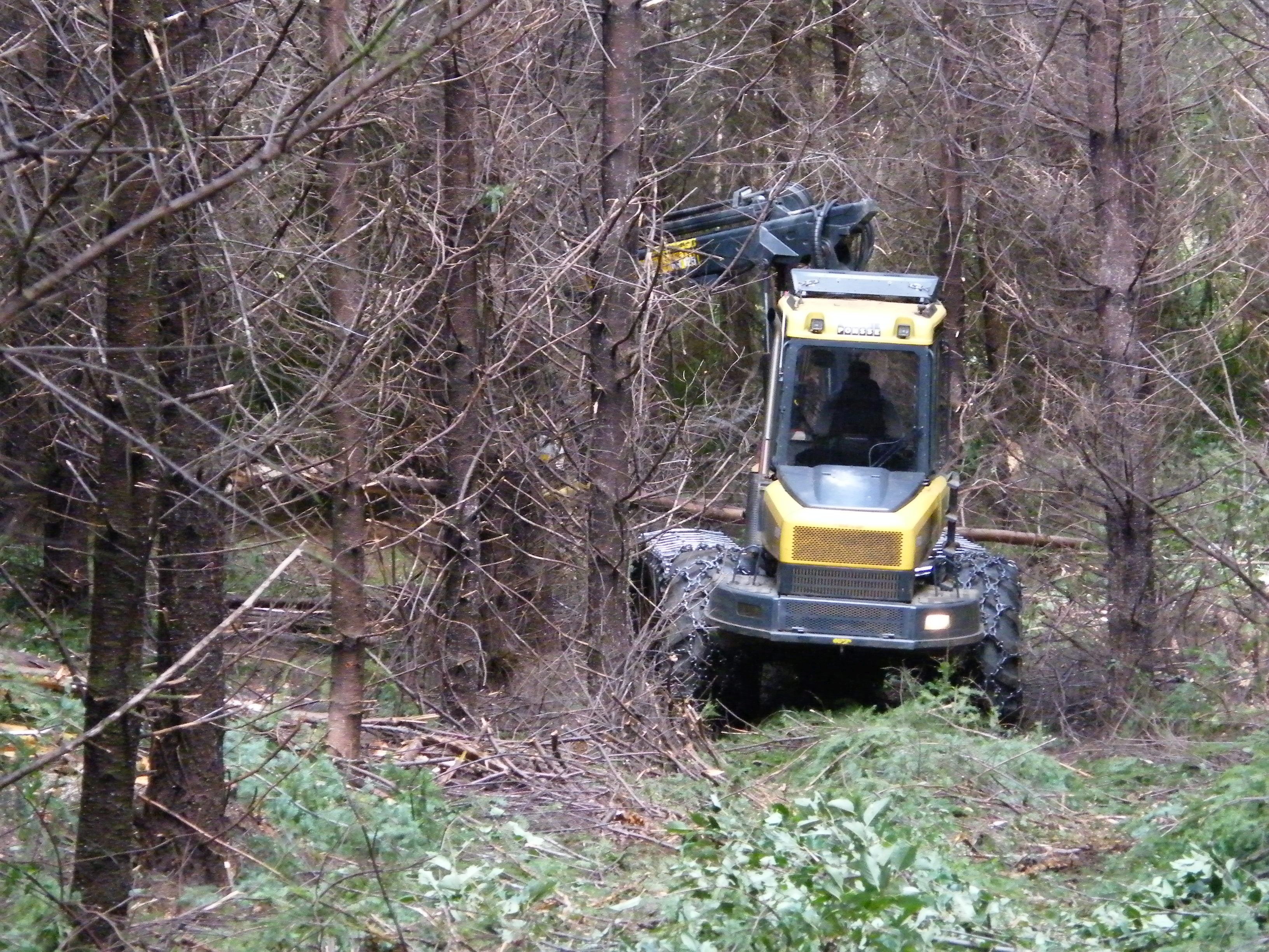 A commercial thinning operation underway in a second-growth Douglas-fir stand. Photo: Dave Shaw, © Oregon State University