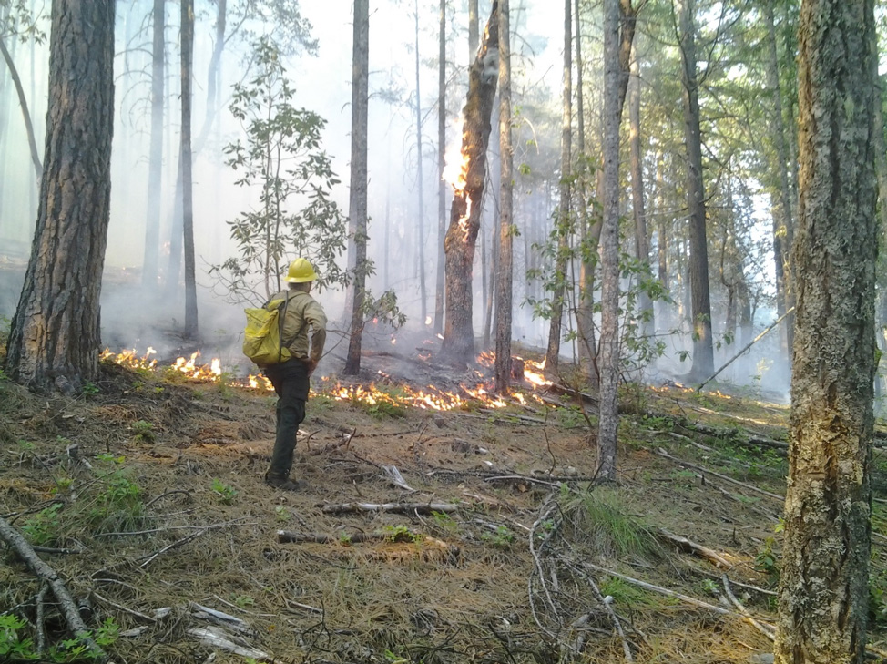 A member of the burn team monitors a low-intensity fire backing down a slope on the Main property near Trail, Oregon. An oak snag burns in the background. Most oaks survived the burn.