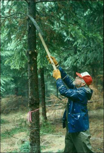 Figure 9. A landowner hand pruning his trees.