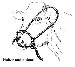 Halter and Animal