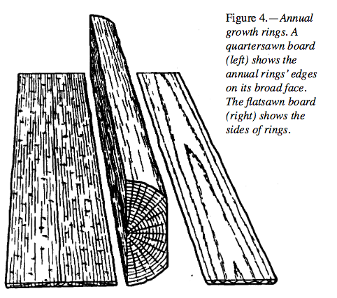 Annual growth rings