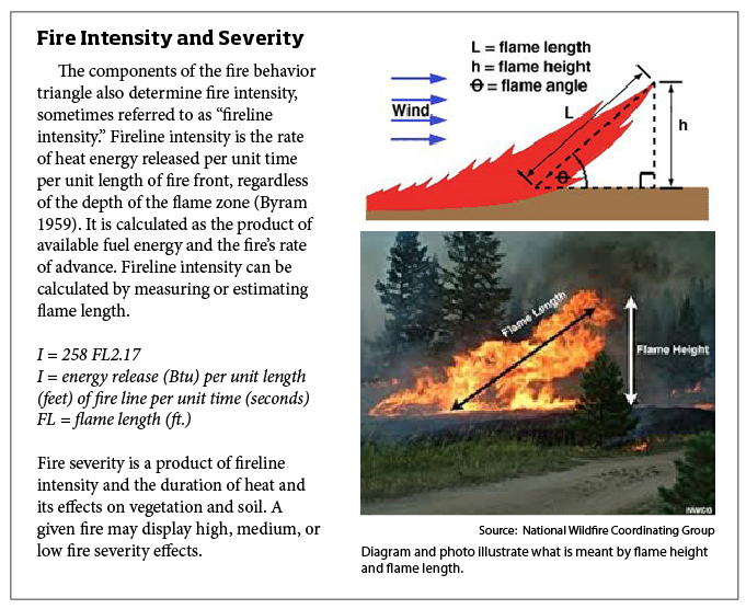 Fire Intensity and Severity