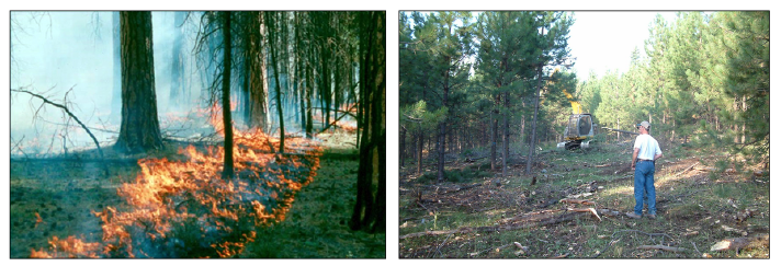 Figure 10. A prescribed burn (left) is used to remove a forest understory while heavy equipment (right) can also help clear brush and reduce fire risk.