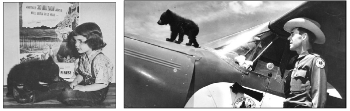 Figure 12. A bear cub rescued from a forest fire in New Mexico was the inspiration for Smokey Bear.