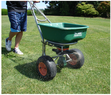 Apply fertilizer to encourage turfgrass growth after mechanical dethatching or pesticide application or both to remove moss