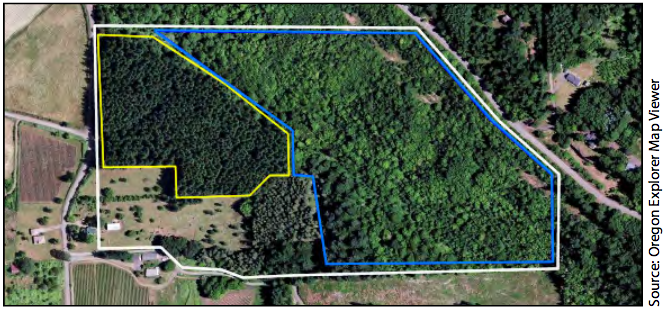 An aerial map of a property that delineates two management units. The unit outlined in yellow is an even-aged conifer stand. The unit outlined in blue is a patchy, mixed conifer/hardwood stand with trees of varying sizes.