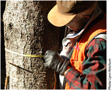 A forest inventory is used to collect data, such as the size, age, and species of trees within a forest stand