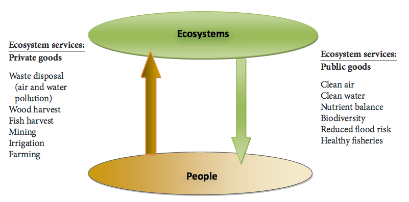 Two types of human interactions with ecosystems.